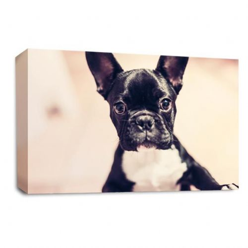 French Bulldog Dog Canvas Wall Art Picture Print